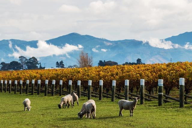 Take the South Island Driving Tour of a Lifetime