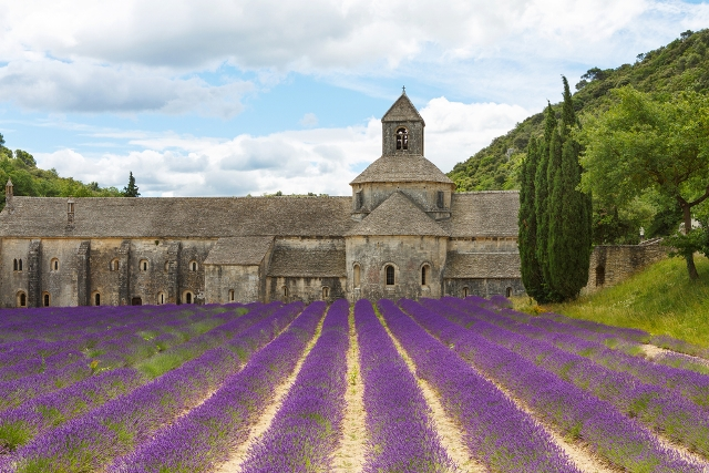 Best Time to Visit France - Lilacs