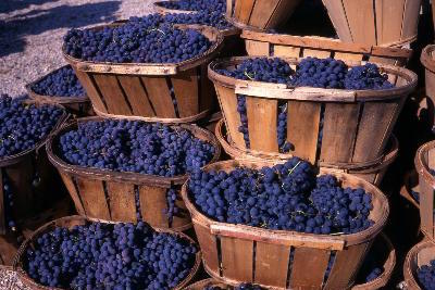 Bordeaux, France Weather: Harvest Season