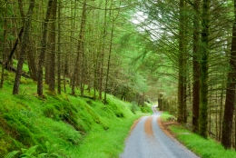 Scottish Highlands Forested Drive