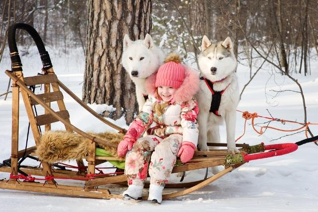 The Kids will Love Dogsledding