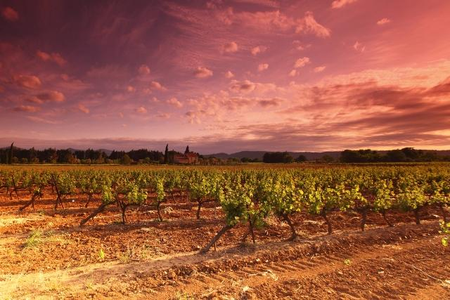 wine-tourism-iconic-vineyards-of-france-auto-europe