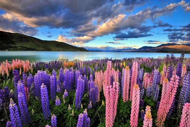5-reasons-spring-is-the-best-season-to-visit-new-zealand-balmy-spring-weather-auto-europe