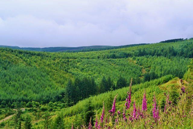 Slieve Bloom Mountains, Ireland