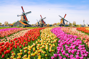 Holland Tulip Fields Road Trip